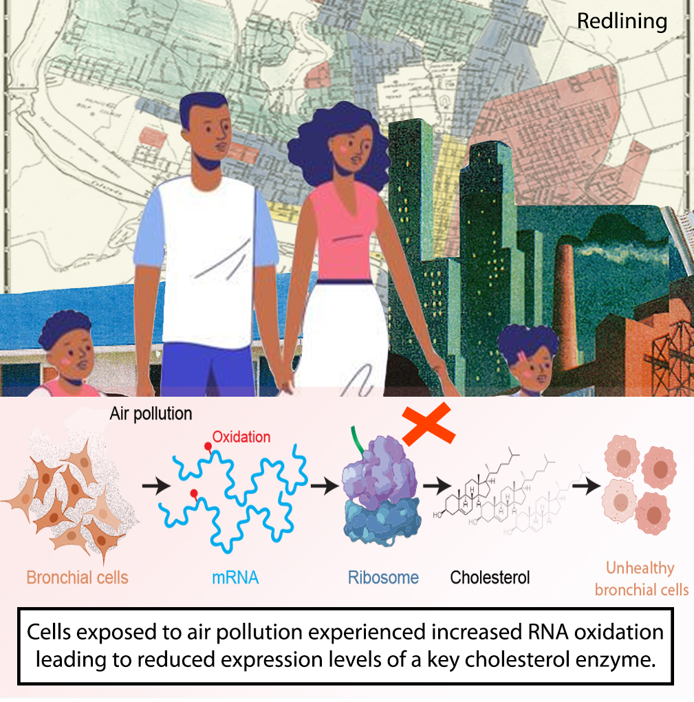 pollution oxidation graphic